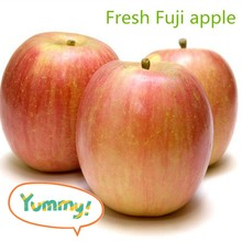Supply Chinese best quality at cheap price fresh Fuji apple