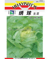 High Germination Rate Crisp Green Leaf Lettuce Seed For Growing-Embroider