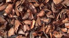 Cocoa Shells