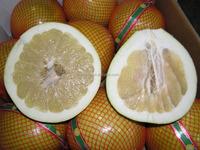 New crop honey pomelo names fruits arabic