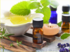 Low price natural & pure oregano essential oil, essential oregano oil bulk