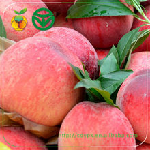 Best Fresh Peach Fruits from the Right Season