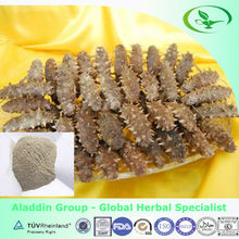 dried sea cucumber for wholesale