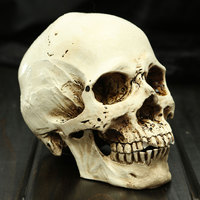 New Halloween Props Small Human Skull Replica Resin White Head Skull Model Gifts Haunted House Room Escape Horrible Supplies