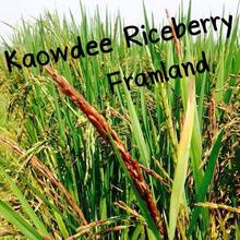 Rice Berry new product of Thailand
