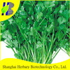 2015 Latest vegetable seed coriander seeds for cultivating