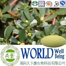 Hot sale Bacopaside 20%/Pseudo Purslane Extract/Bacopa extract/Treat Epilepsy plant extract
