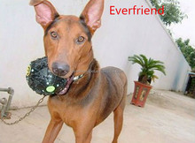 pets training goods,other pet accessories