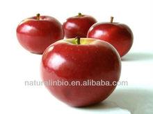 Apple extract 98% phloretin to reduce weight
