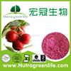 High Quality 100% Dried Cranberry Powder/ Cranberry Juice Concentrate Powder/cranberry fruit powder