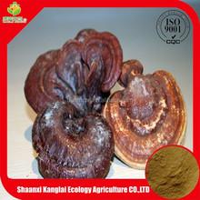 Best Selling Wild Reishi Mushroom Extract polysaccharide 10%
