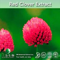 Top Quality Red Clover Powder,Red Clover Powder Extract,Red Clover P.E.