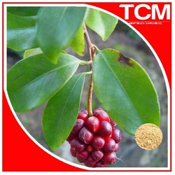 Schisandra extract free sample FDA certified factory supply liver protection schisandra berry extract 20:1