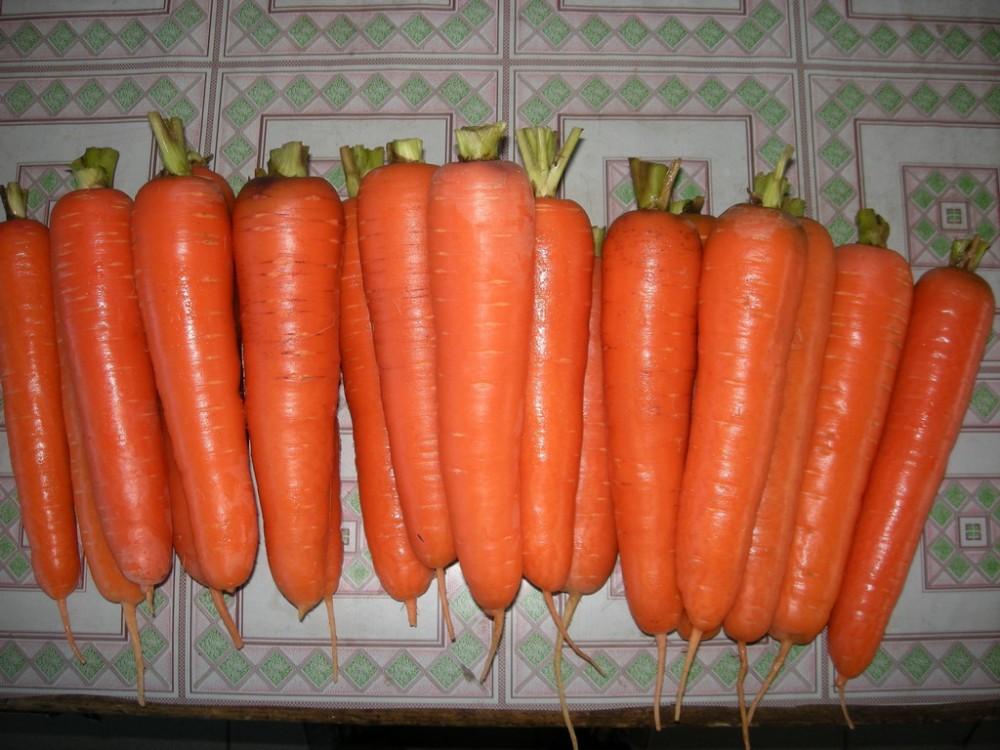 Organic Carrots Bulk Fresh Organic Bulk Carrot For