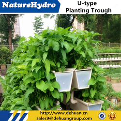 Agricultural Plastic Planting Trough For Health Vegetables And Fruits