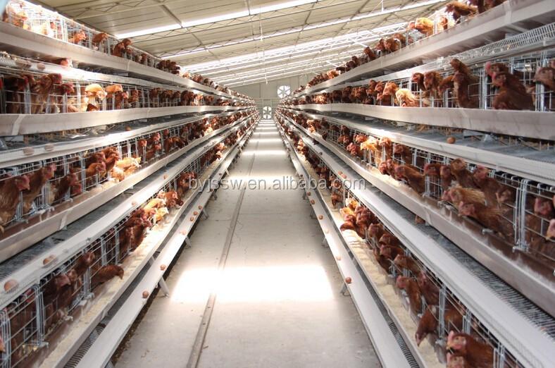 chicken cage-444.jpg