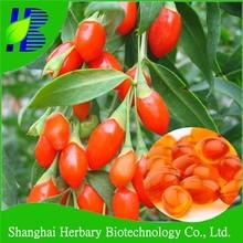Natural slimming capsule dietary supplement goji berry capsule