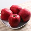 2015 New crop Huaniu apple new season Hua niu apples