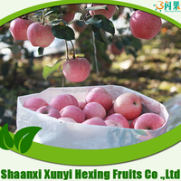 Professional Fruit Supplier fresh persimmon fruits for sale