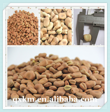 Organic Cultivation Type Long Shape Light Speckled Kidney Beans sale,Bulk Packaging all types of Kidneys beans exports