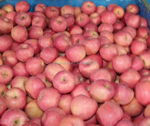 Yantai fuji Apple imports exports in nepal