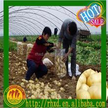 Price of the fresh potato