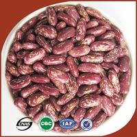 Types of Kidney Beans Bulk Purple Speckled Kidney Beans