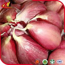 fresh red garlic purple garlic 4.5cm-6.0cm 2015 new crop
