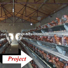 Taiyu design layer chicken cages for kenya hen farm (full poultry equipment and own oversea agent)