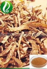 Angelica sinensis Extract / Dong Quai Extract