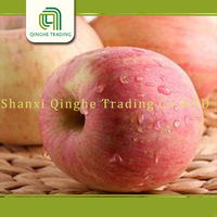 buy fresh apple fresh fuji apple fruit for sale fresh fuji and qinguan apples