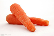 Best fresh cheap price carrot from China