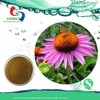 GMP Manufacturer echinacea purpura extract polyphenols/chicoric acid