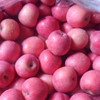 FRESH FRUITS FUJI APPLE