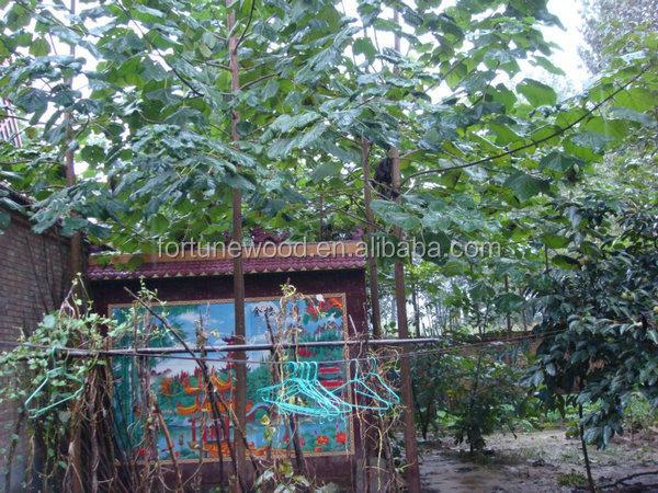 Chine paulownia de d coupe racine souche d 39 arbre pour la plantation autres produits agricoles id - Produit destructeur de souche d arbre ...