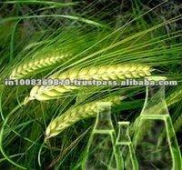 Pure Grain Alcohol 96%