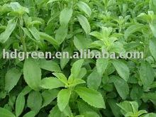 Stevia Leaves P.E