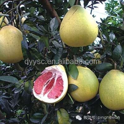 red honey pomelo