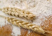 wheat flour wheat wheat grain