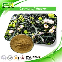 100% Pure Natural Crown of Thorns Extract/Crown of Thorns Extract Powder