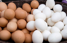 Fresh Poultry Eggs, Brown and White Eggs chicken eggs