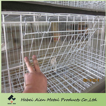 design layer brolier chicken cage with automatic water system