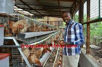 TAIYU Layer Chicken House in Kenya
