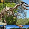 Mi dino- parque jurásico equipo réplica museo esqueleto de dinosaurio