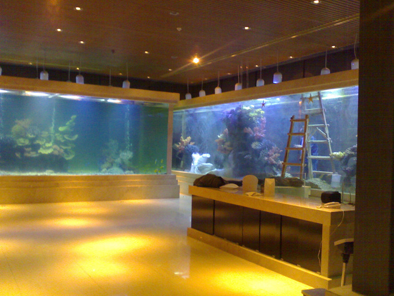 custom acrylic fish tanks