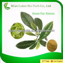 New product Matcha Green Tea Powder/ Green Tea Extract 40% to 80% Catechins