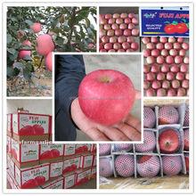 leading manufacturer fuji apple