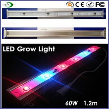 European and American markets hot sale build for African Violet, Basil, Orchids, Roses led grow light