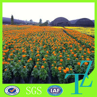 Cheap price PP ground cover mat/plastic weed prevention cloth