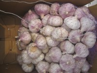 Fresh Red Garlic Price for Sales